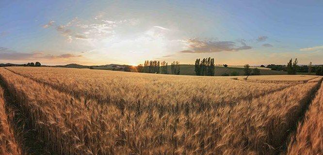 Comment procéder à la succession d'une exploitation agricole ?