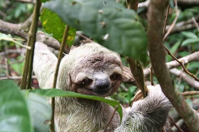 Deux endroits remarquables pour découvrir les animaux du Costa Rica