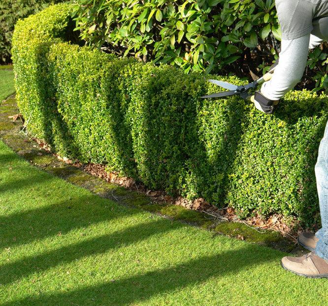 Entretien jardin, les avantages avec le service à la personne