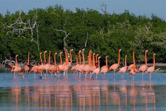 Partir à la découverte des animaux du Mexique